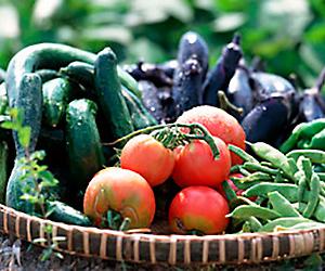 会津自然塾の新鮮野菜